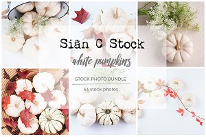 White Pumpkins Stock Photo Bundle