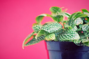 Green plant on red background