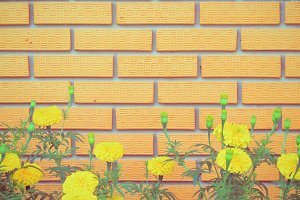 brick wall with yellow flower in gar