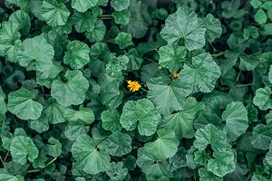 Yellow flower on a concept in the middle of green flowers. Summer landscape in the city. The idea is one against all.