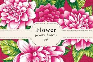 Peony flower designs.