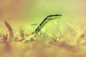 snake, animal, macro,