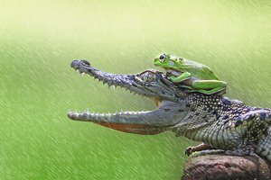 frog and crocodile, animal, macro,