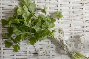 bouquet of fresh coriander or cilant