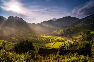 ​Landscape of Rice fields