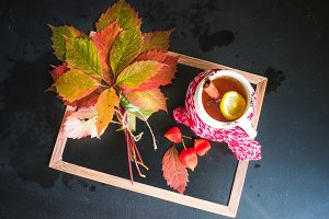 Autumnal concept with leaves