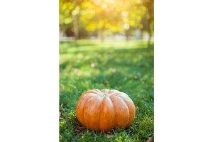 Big pumpkin on lawn over autumn nature background.
