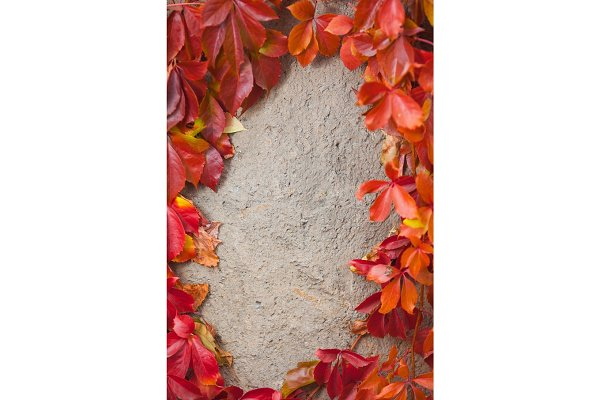 Autumn abstract frame. Wall and lea…