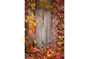 Autumn abstract frame. Fence and leaves