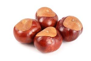 chestnut isolated on white background closeup