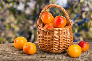 yellow plums with leaf in a wicker basket on a wooden table with a blurry garden background