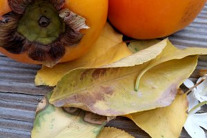 Persimmons and dry leaves