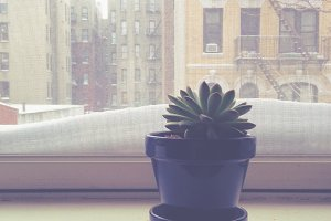 Succulent on Snowy Sill