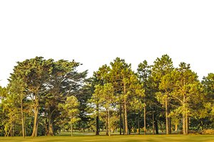 Big Trees at Park Isolated Photo