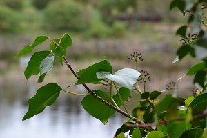 bush in the lake