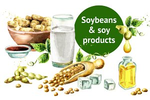 Soybeans & soy products. Watercolor