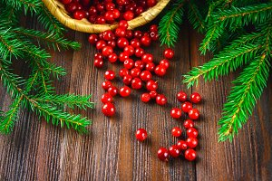 Cowberry, foxberry, cranberry, lingonberry sips from the basket on a brown wooden table. Surrounded by fir branches.