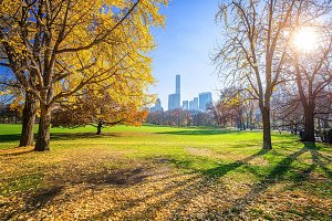 Central park at sunny autumn day