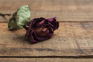 Dry red rose on wooden background