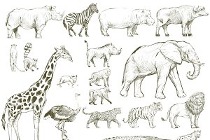 Illustration drawing of wildlife