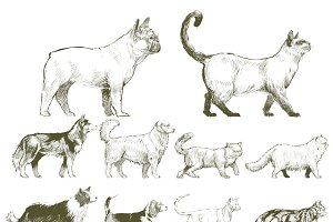 Illustration drawing of animals