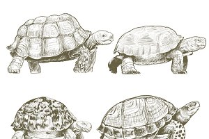 Illustration drawing of turtles