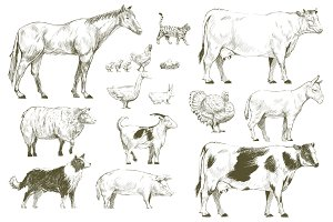 Illustration drawing of horses