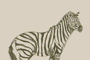 Illustration drawing of zebra