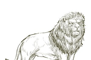 Illustration drawing of lion