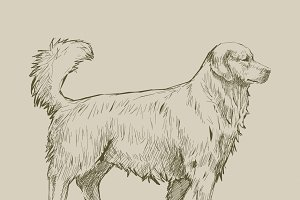 Illustration drawing of dog