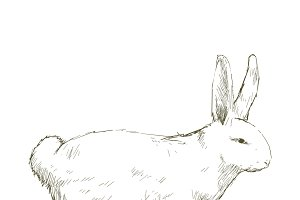 Illustration drawing of rabbit