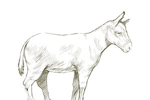 Illustration drawing of donkey