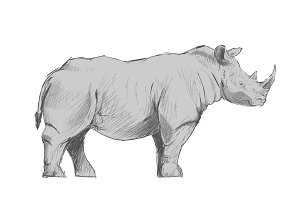 Illustration drawing of rhino