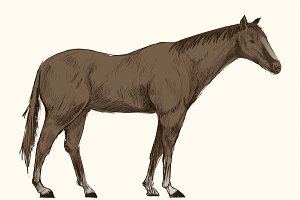 Illustration drawing of horse