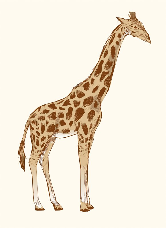 Illustration Drawing Of Giraffe