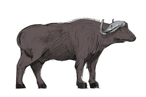 Illustration drawing of buffalo
