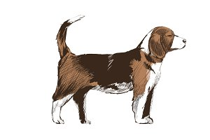 Illustration drawing of dog
