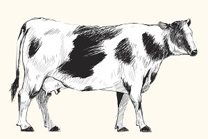 Illustration drawing of cow