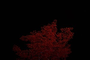 The Red Autumn