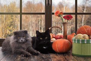 Cats lying on the windowsill. Outside the window, autumn. Pumpkins, onions in a basket, flowers in a vase. Cozy