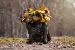 dog sitting outdoors wearing an autumn leaves wreath
