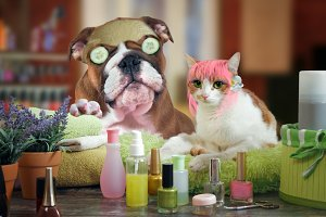 cat and dog beauty salon