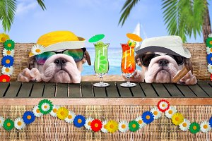 Two happy dogs resting. Ocean, palm trees, tourist rest, garlands of flowers. Refreshing cocktails, cigar