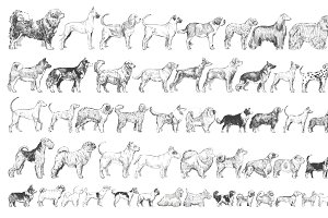 Illustration drawing of dogs