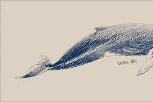 Illustration drawing of whale