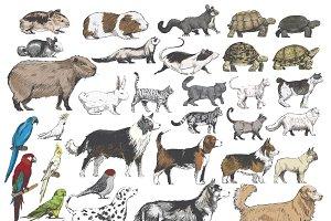 Illustration drawing of animals