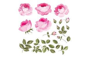Vintage roses set.