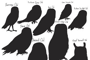 Illustration drawing of owls