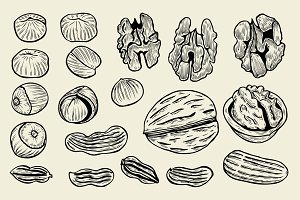 hand drawn nuts.