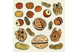 set of hand drawn nuts